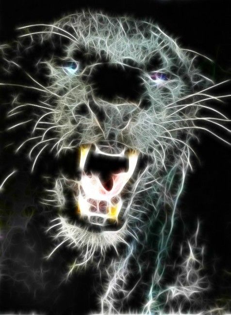 best images about tigers on Pinterest Black tigers Tiger | 3D ...