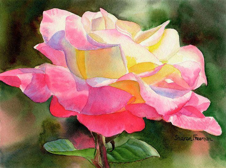 Princess Diana Rose Watercolors Pink Roses And Hybrid