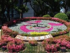 神戸で待ち合わせの定番スポットになっているのが神戸市役所の北側にある花時計 東京でいうなら渋谷のハチ公前みたいな存在かな(笑) この花時計は1957年に日本で初めて作られたものなんですって キレイな花の上を日々時計が動き続けていますよ 季節ごとに花の植え替えをするから観光客はもちろん地元の人も楽しみにしてるんだよね 神戸を観光するならまずはここから行ってみてね()  #神戸 #観光 #花時計 #ハチ公 #時計 #兵庫 tags[兵庫県]