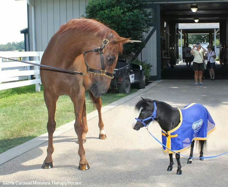 Too cute!! Kentucky Derby and Preakness Stakes Winner Funny Cide and a Therapy horse named Magic at the Kentucky Horse Park