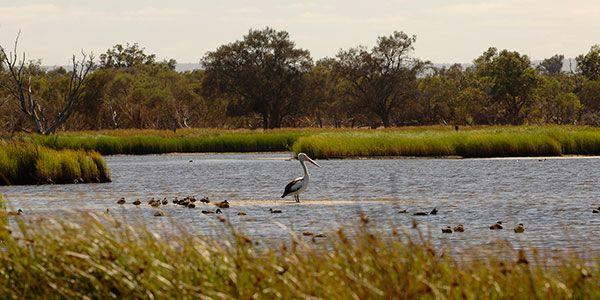 Exploring The Peel Region In Western Australia