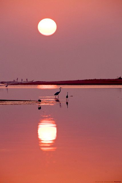 A serene Sunrise at Muttukadu River, with the Indian Ocean in the