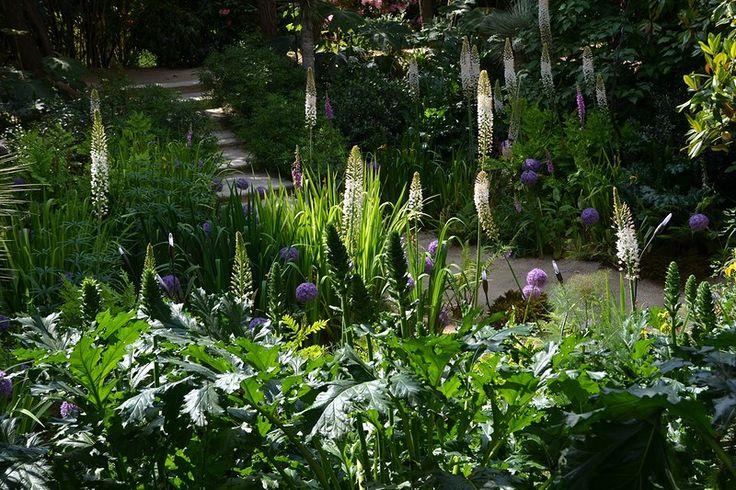 les 25 meilleures id es de la cat gorie agapanthe blanche sur pinterest petit jardin l. Black Bedroom Furniture Sets. Home Design Ideas