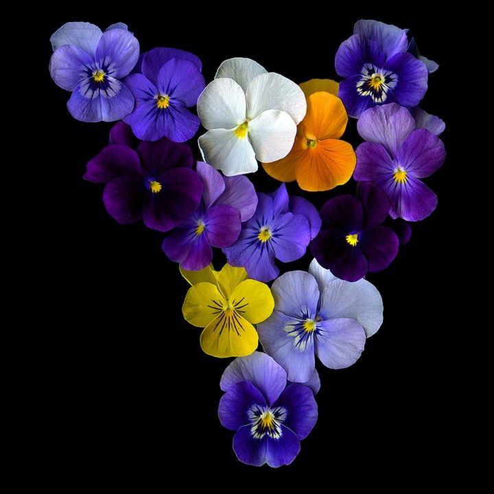 Фото красивых цветов. (24)