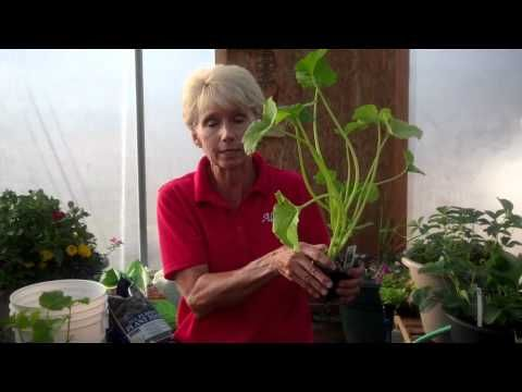 How to Plant Veggies - YouTube  Allred's Yard & Garden: Gardens Ideas, Green Thumb, Allr Yard, Yard Gardens, Youtube Allred, Gardens Tips Flowing, Plants Veggies, Allred Yard, Gardens Stuff