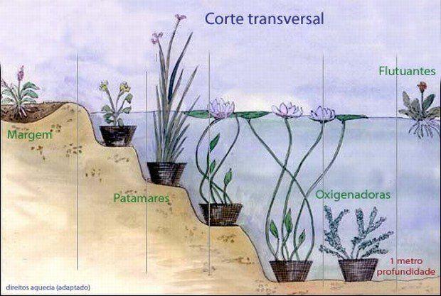 M s de 25 ideas incre bles sobre lago artificial en for Como criar tilapias en estanques