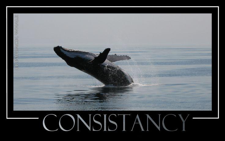 Consistancy