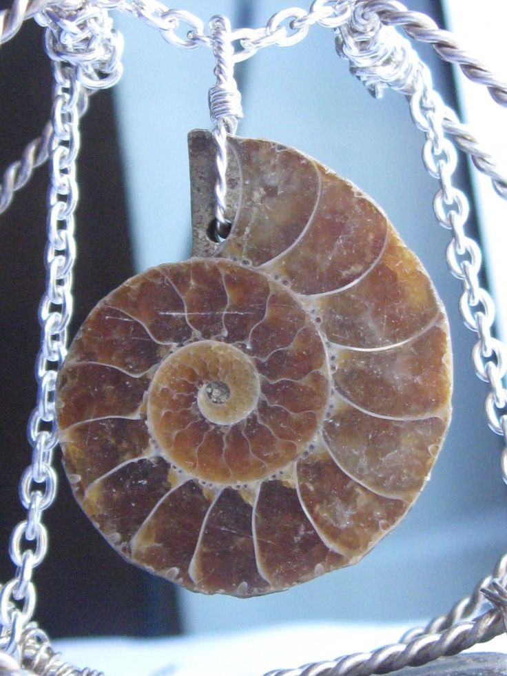 Silver necklace with ammonite pendant