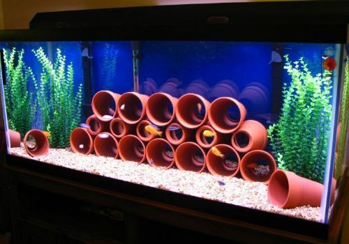 Pretty inexpensive approach to a African Cichlid tank....wish I would have seen it before I bought Lava Rock....