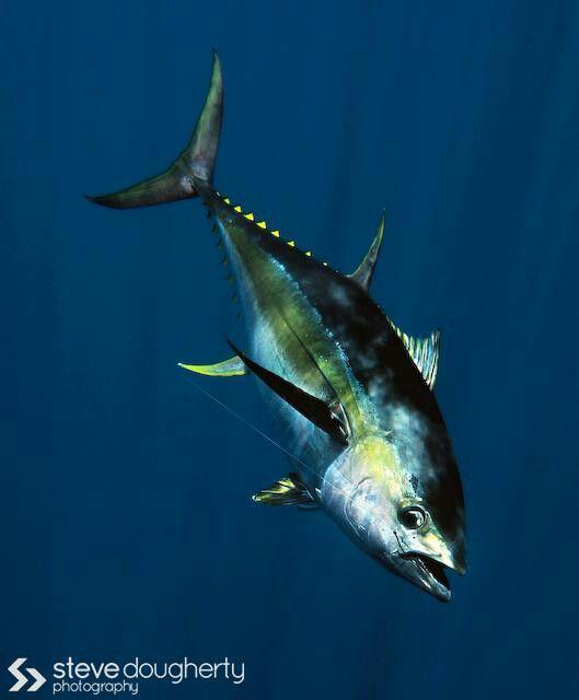 Got tuna?