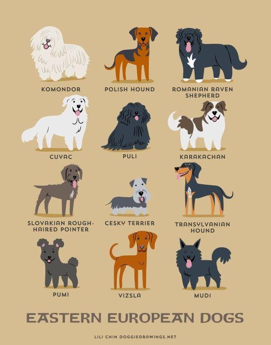 Stampa art cani europeo orientale razze canine di doggiedrawings