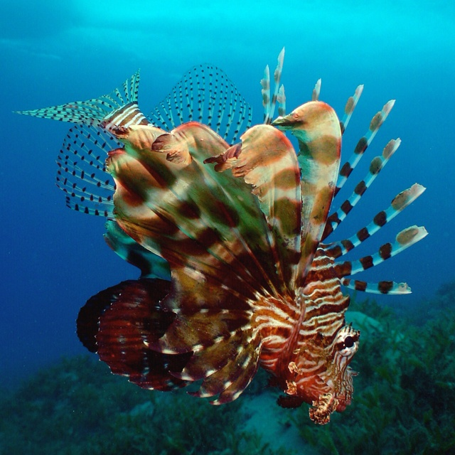 From scuba diving in the Red Sea saw some amazing sea creatures!