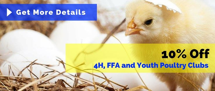 Cackle Hatchery: Chicken Egg Hatchery - Baby Chicks, Poultry & Fowl