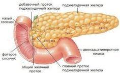 ОЧИЩАЕМ ПОДЖЕЛУДОЧНУЮ ЖЕЛЕЗУ Поджелудочная железа — орган