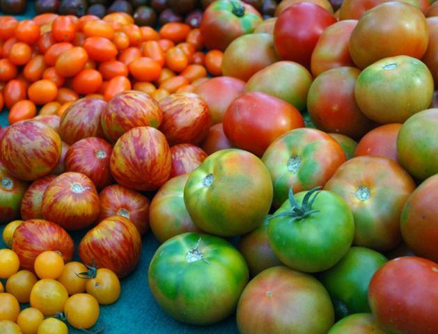 Les meilleures variétés de tomate : des valeurs sûres précoces, de mi-saison, et tardives.