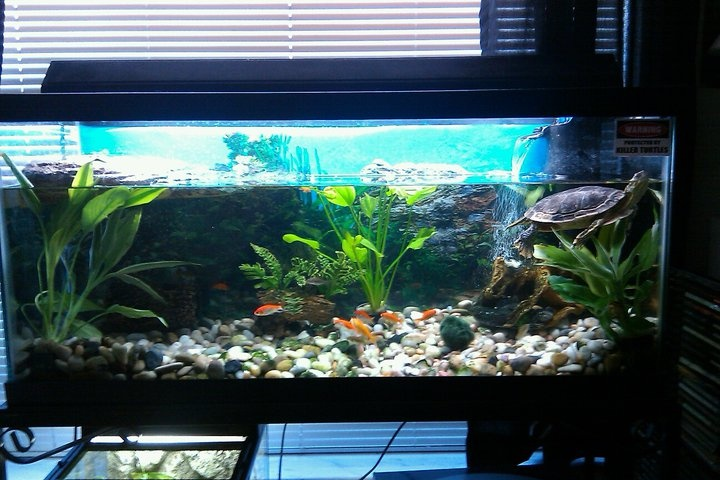 or this turtle tank setup ideas for our home
