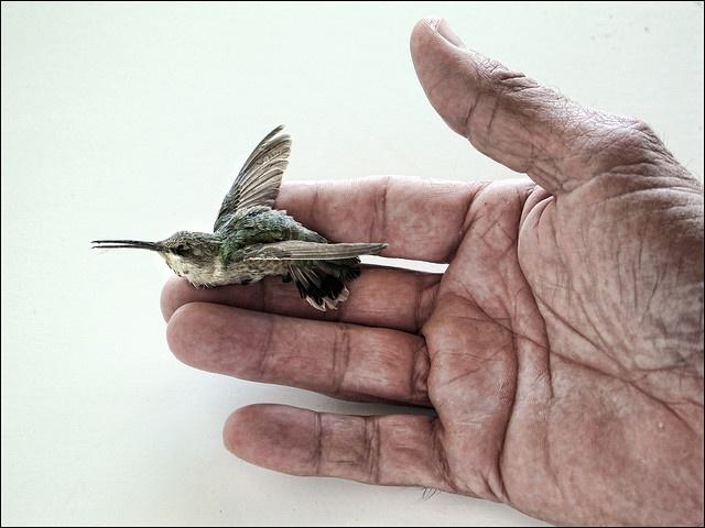 ...hummingbird....