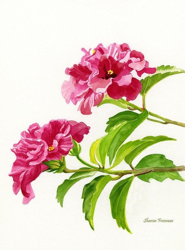 Red Art Print featuring the painting Two Hibiscus Rosa Sinensis Blossoms by Sharon Freeman