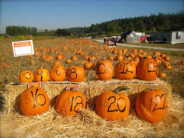 Corn Maze and Pumpkin Patch | Seattle Area Pumpkin Patches and Corn Mazes
