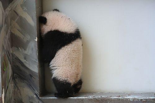 クリスマスパーティーに参加したいのに、スキップすらできない、まして薔薇様とダンスなんて・・・(足の短さを気にするパンダ隊員) Bad Panda? | Mei Lun
