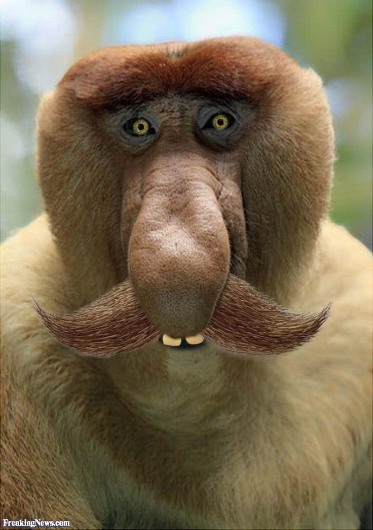Monkey Looking Thinkfully Into The Camera Objective Stock Photo ...