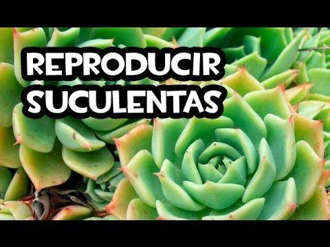 Ideas para plantar suculentas - Trucos del Experto @cosasdeljardin - YouTube