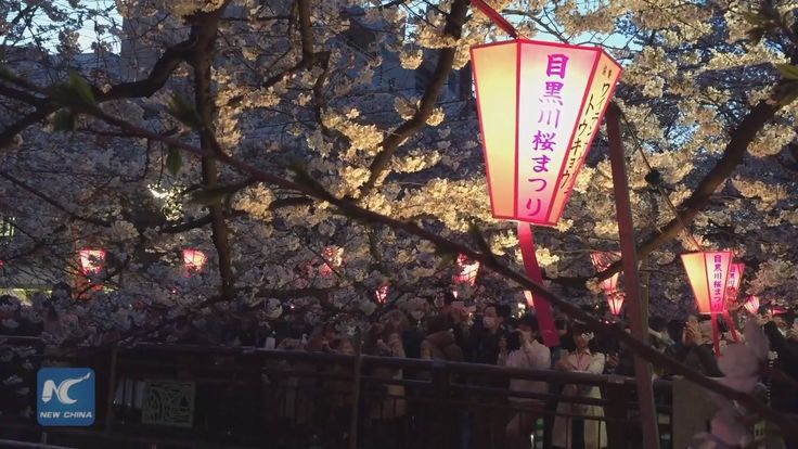 With the cherry blossoms bursting into bloom in Tokyo, the city's most popular viewing spots are already packed with Japanese people and tourists from all over the world.