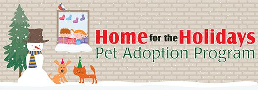 Home for the Holidays Pet Adoption Program at Town of Hempstead Animal Shelter in Wantagh, NY! ~ Shake the Chill Off the Season with a New Furry Friend When the weather outside is frightful, there's no better way to spend the holiday season than in your warm home with a new cat or dog to call your own! That is why the Town of Hempstead is providing a great holiday gift for America's largest township...free pet adoptions from November 21, 2015 to January 3, 2016.