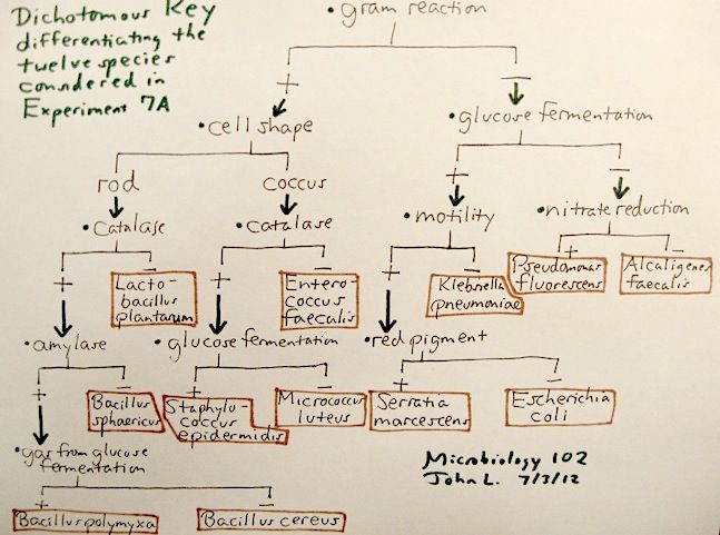 Microbiology Microbiology Flow Chart Microbiology Study