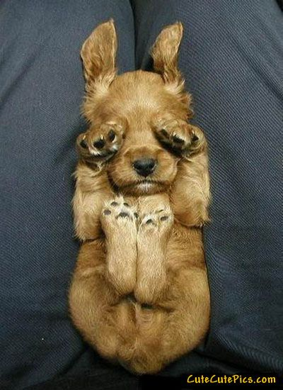Please let me sleep...: Animals, Puppies, Dogs, So Cute, Peek A Boos, Pets, Puppys, Funny