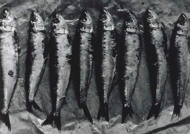 Untitled (row of eight fish), from the series Sacrifice, Michael Riley, 1992 :: The Collection :: Art Gallery NSW