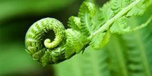 A fern branch spirals into itself.