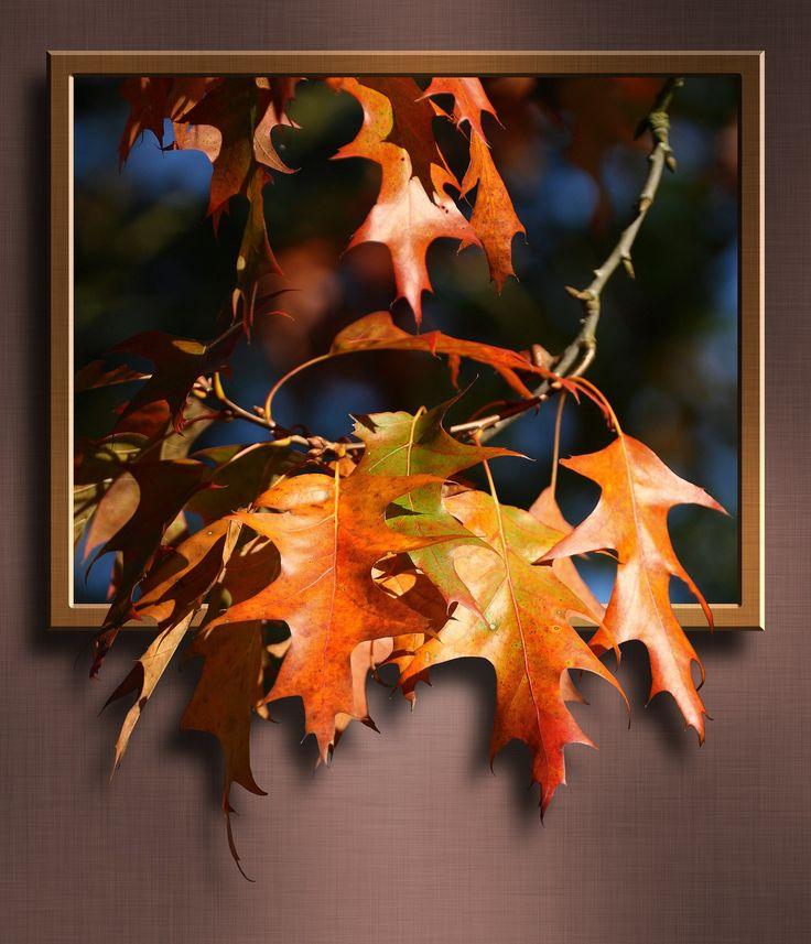 maple-leaves-252097_1920.jpg (1647×1920)