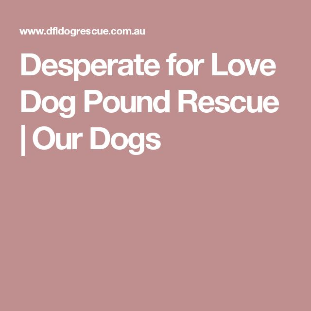 Desperate for Love Dog Pound Rescue | Our Dogs