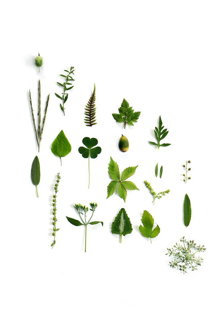 september bits of green (mary jo hoffman)