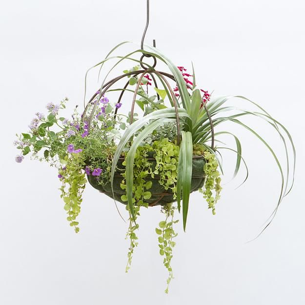 Sphere Hanging Basket At Terrain Great For An Indoor