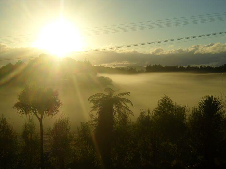 Misty sunrise.  Maungatapere, New Zealand. Photo by Sally Williams