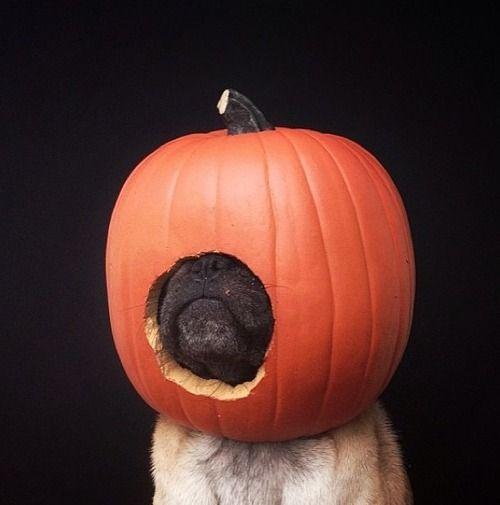 Not everyone loves fall.