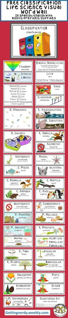Take our Life Science Classification Word Wall for a test drive for FREE: Comes with Spanish & English translation, Roots/Prefixes/Suffixes and it's visually appealing to students! #gettingnerdy