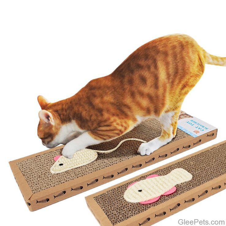 Corrugated Cat Scratcher   // FREE Shipping //    #cat_features_daily #catsagramcats #petsagramworld #catlovely #cuturdaycatcafe #petstagram #cuturdays #kucingimut #bestmeows #gato_cats #kittycatlove #happycaturday #whitecatsofinstagram #cutestcat #cattery #cutecatskittens #cuturday365 #mainecooncat #happycat #ilovemycats #chaton #thedailykitten #whitecat #cat_features