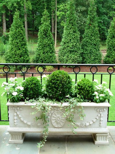 MINIATURE EVERGREENS | An elegant composition by Atlanta Garden Designer Marcia Weber
