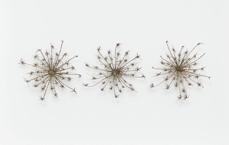 Alice Padovani - Vegetal works www.alicepadovani.com