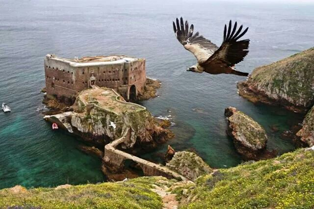 O voo da águia.