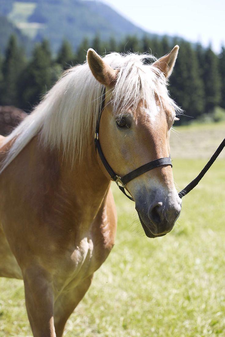 Urlaub am Bauernhof mit Pferden // Farm holidays with horses