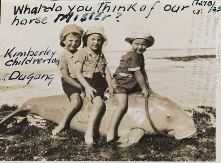 1727B/25: Children sitting on dugong, probably caught in Talbot Bay, ca. 1920.  http://encore.slwa.wa.gov.au/iii/encore/record/C__Rb4313738__S1727bLw%3D%3D25__Orightresult__U__X3?lang=eng&suite=def