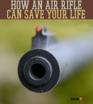 How A Simple Air Rifle Can Save Your Life | Air Rifle for Survival | Small Hunting with an Air Rifle | BB Guns for Survival | survivallife.com