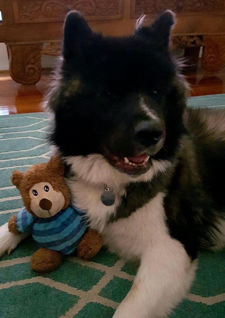 Mumma bear with baby bear  ❤❤❤