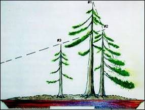 Wonderful tutorial on how to create a forest or group bonsai.  Forest Plantings | American Bonsai Society