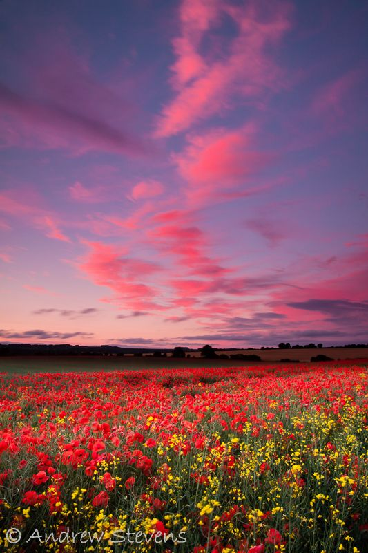 There's something about a field of poppies - and when the sunset turns the clouds pink too...