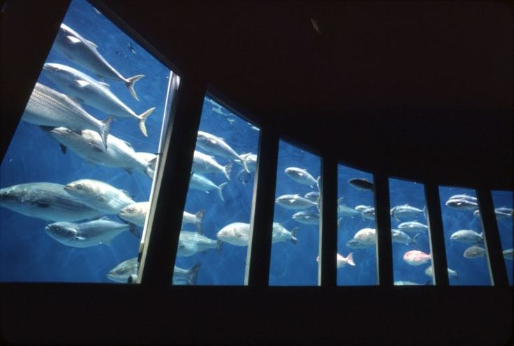 Meyer Fish Roundabout Steinhart Aquarium 1983